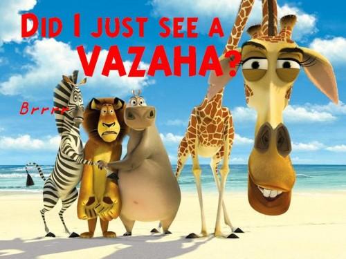 Vazaha
