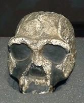 Onvoorstelbaar oud fossiel in real life, whaaah!