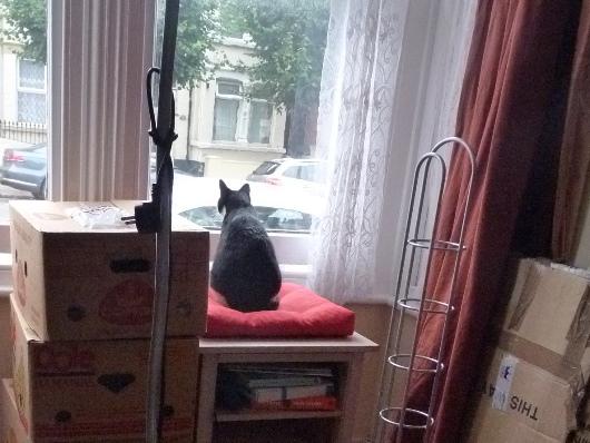 Ivan kijkt uit het raam