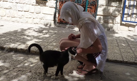 Cat in Jerusalem