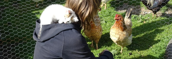 Cat and chickens